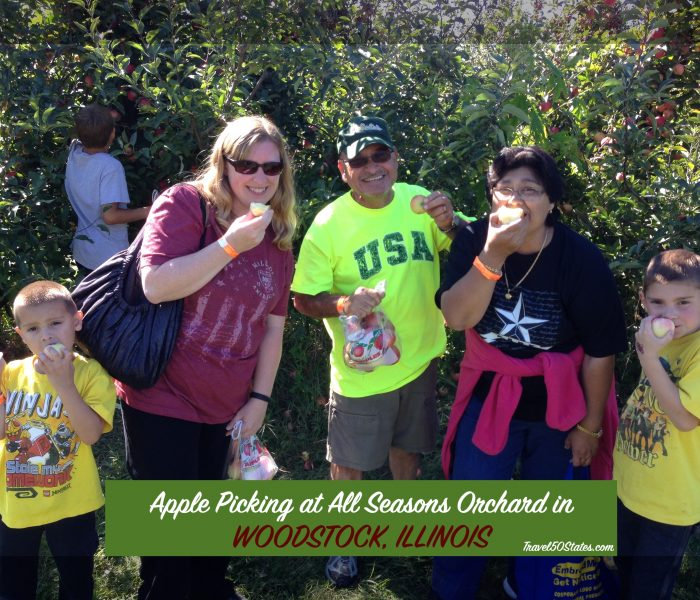 Apple Picking at All Seasons Orchard in Woodstock, Illinois
