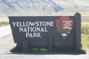 Yellowstone 2014 046