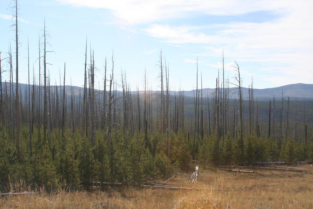 Yellowstone 2014 154