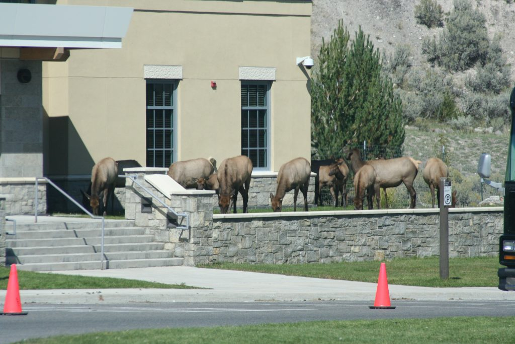 Yellowstone 2014 381