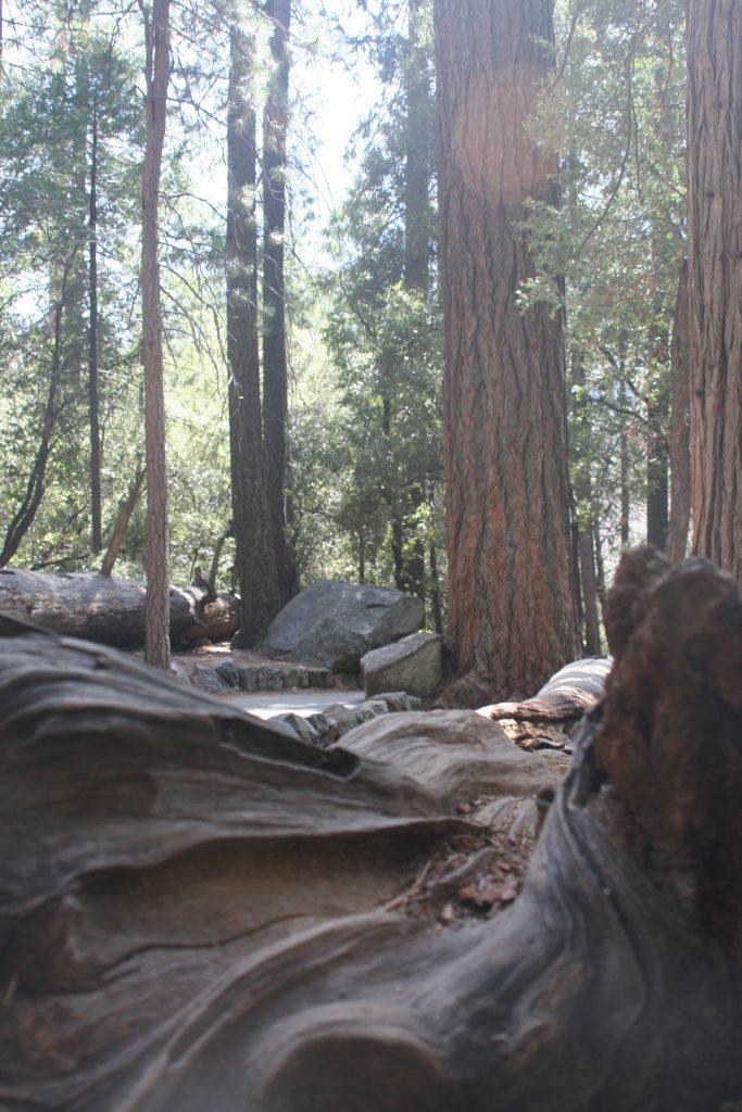 California Yosemite 2015 canon 102