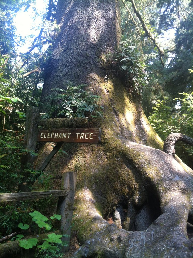 California Redwood National Park 2015 013