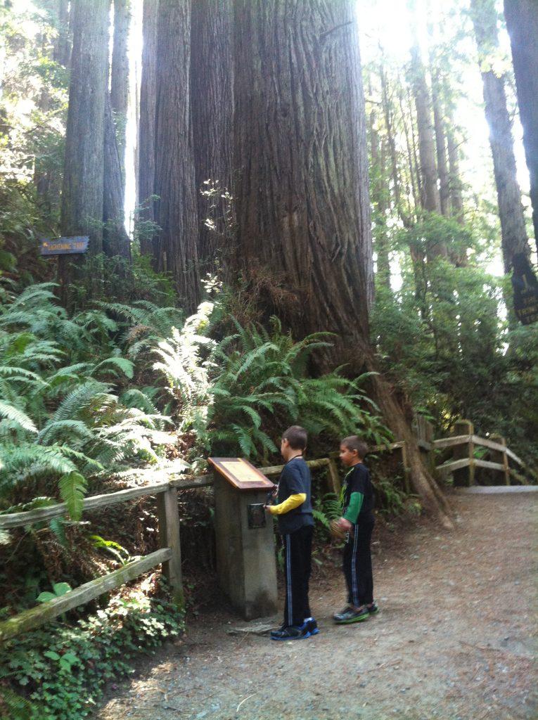 California Redwood National Park 2015 035