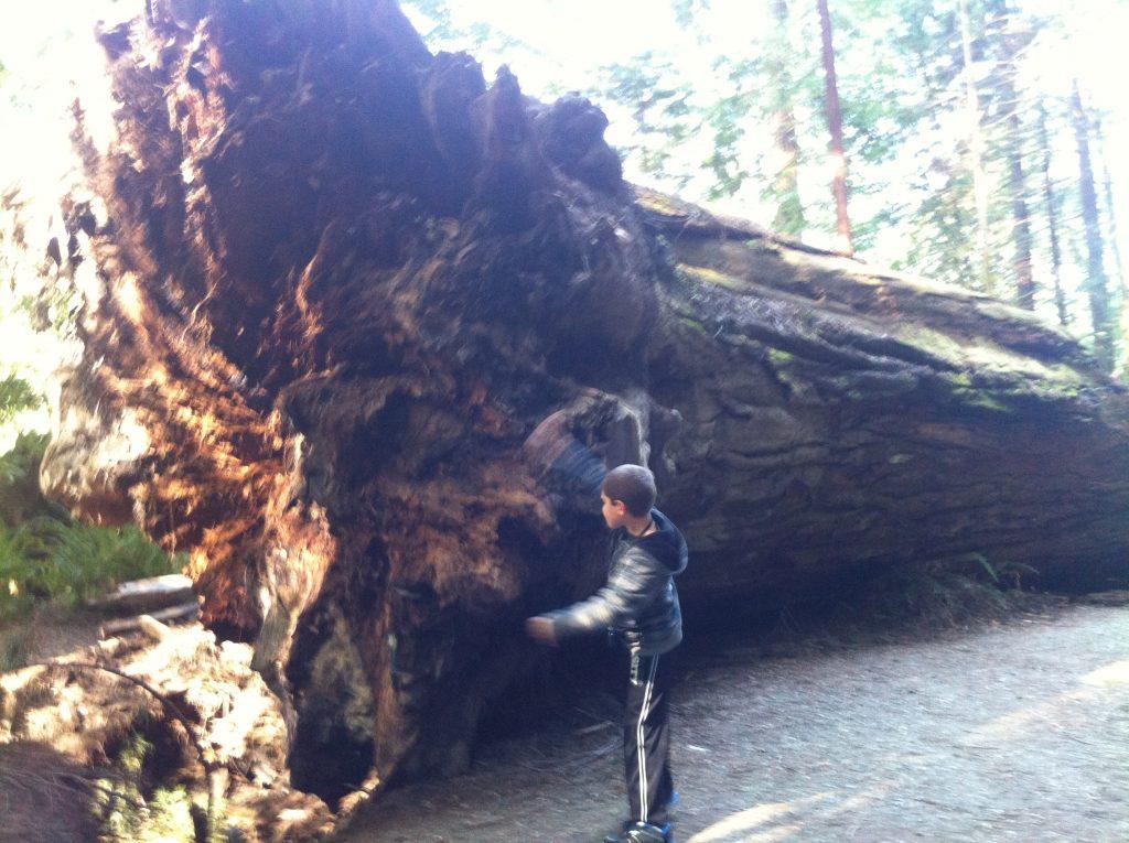 California Redwoods 2015 030