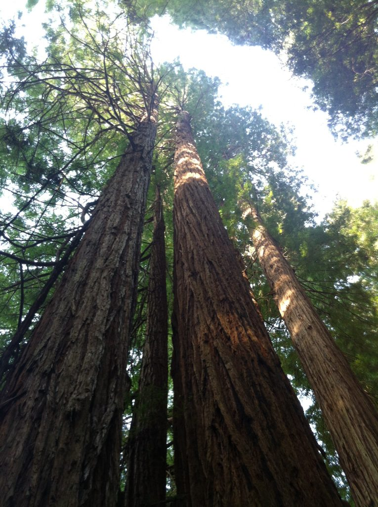Redwood National Amp State Parks California Travel 50 States