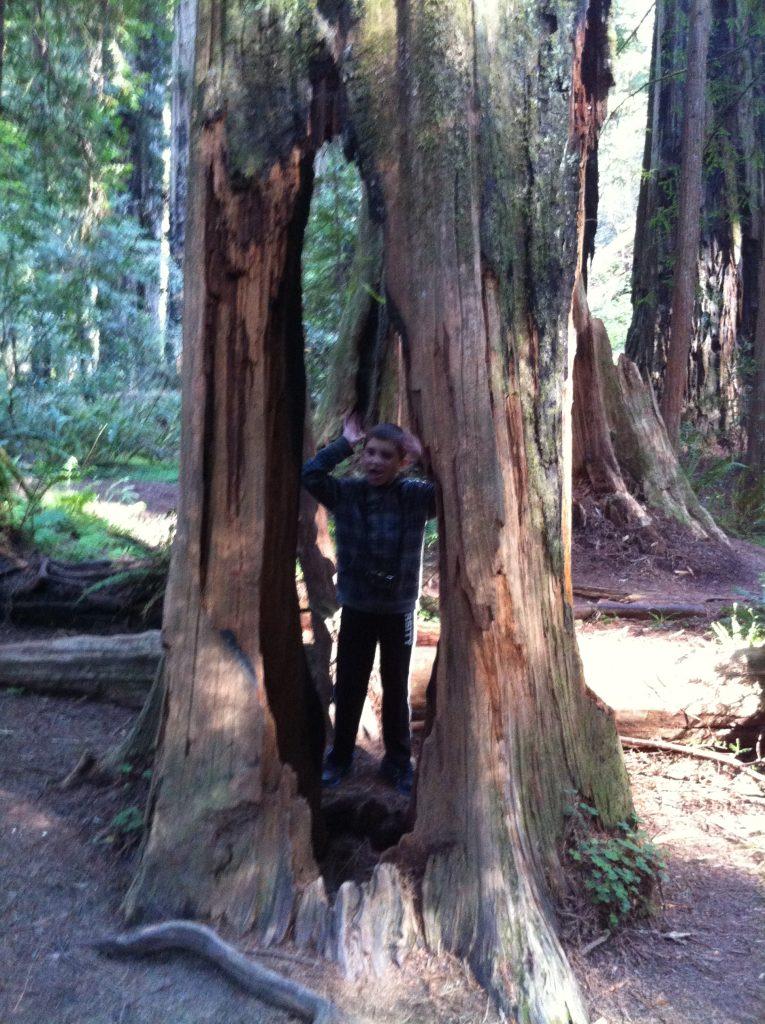 California Redwoods 2015 050